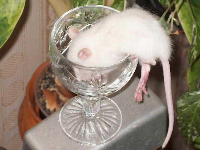 Что пить при алкогольной зависимости
